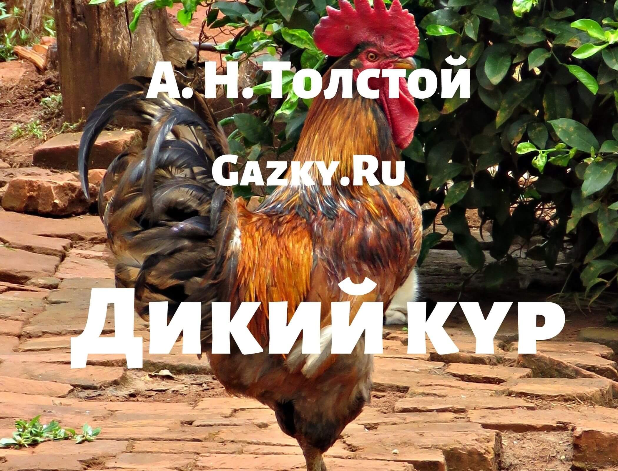 """Сказка """"Дикий кур"""" Толстого А. Н."""