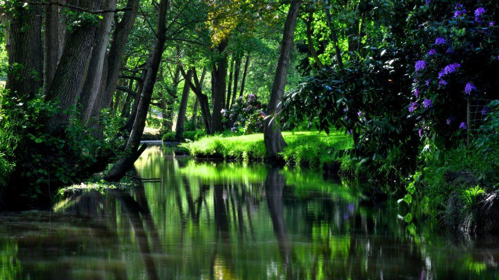 Зеленый пруд