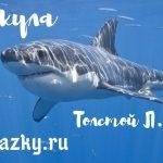 Акула Толстой Л.Н.