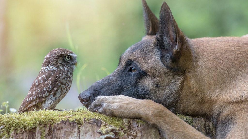 Пёс и воробей Якоб и Вильгельм Гримм