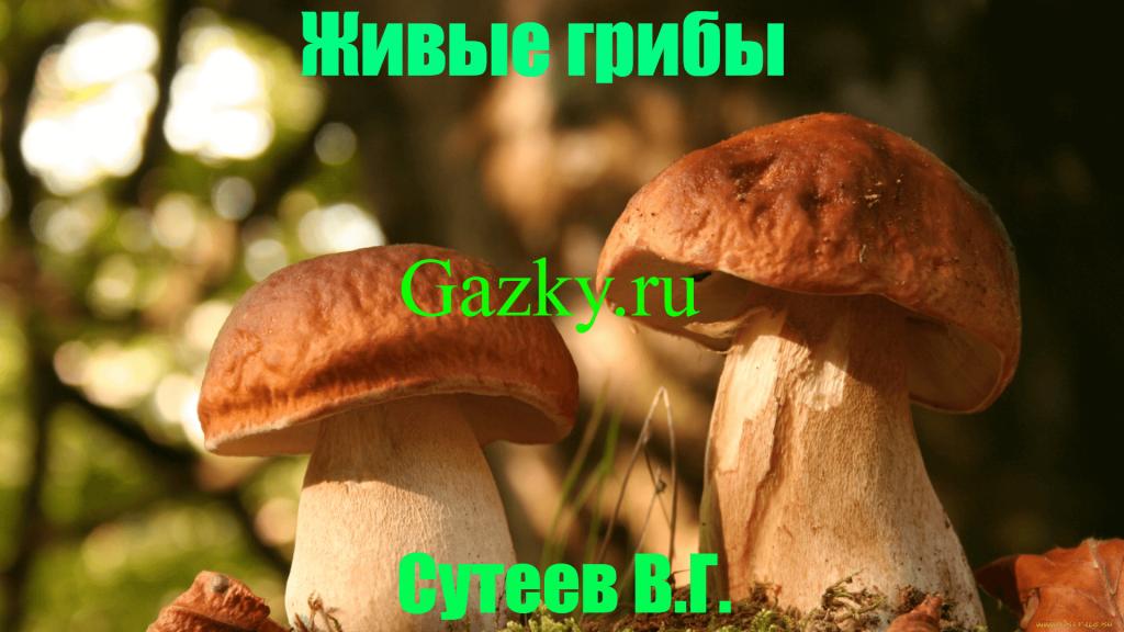 Живые грибы Сутеев В.Г.